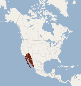 Distribution of Macrotus californicus.png
