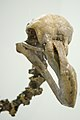 Dodo skeleton head.JPG