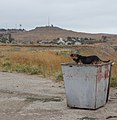 Dog in garbage container - Kerch, Russia - panoramio.jpg
