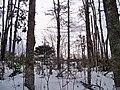 Dromore Trail, PEI (6783654356).jpg
