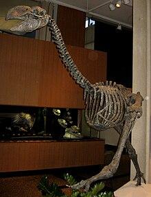 Dromornis stirtoni 01.jpg