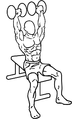 Dumbbell-shoulder-press-1.png