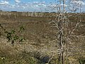 Dwarf Cypress trees, Everglades National Park, Homestead, Florida (39470942755).jpg