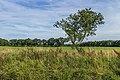 Eenzame boom in de lendevallei. Locatie, Stuttebosch in de lendevallei. Provincie Friesland 03.jpg