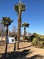 El Manzanares cuenta con un nuevo arboreto y cuatro rutas botánicas, faunísticas e históricas 04.jpg