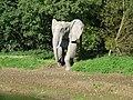 Elephant in Essex - geograph.org.uk - 1000749.jpg