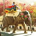 Elephant returning to Jaipur from Amber Fort. - panoramio.jpg