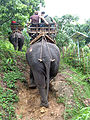 Elephant ride in Chiang Rai Province 2007-05 1.JPG