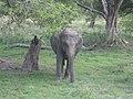 Elephantine guardian (7568367306).jpg