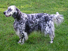 Gifts for English Setter Dog Lovers