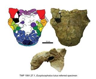 <i>Euoplocephalus</i> genus of reptiles (fossil)