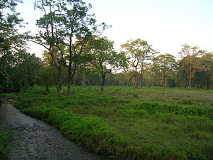 Jaldapara National Park - Image: Evening At Jaldapara
