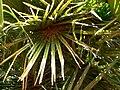 Fale - Giardini Botanici Hanbury in Ventimiglia - 228.jpg