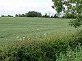Farmland near Bruntingthorpe - geograph.org.uk - 875144.jpg