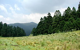 Field-pines-mountain.jpg