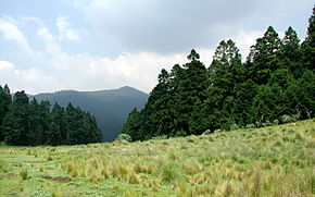 Description de l'image Field-pines-mountain.jpg.