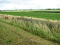 Fields beside the River Great Ouse - geograph.org.uk - 1390481.jpg