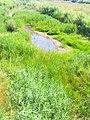 Fiume Cornia in estate. - panoramio.jpg