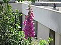 Fleur au Campus de Beaulieu.JPG
