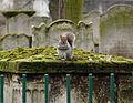 Flickr - Duncan~ - Posing Squirrel.jpg