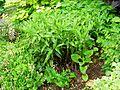 Flickr - brewbooks - Our Garden - May, 2008 (4).jpg