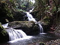 Flickr - brewbooks - Waterfall - Hawaii Tropical Botanical Garden.jpg