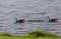Flickr - jimf0390 - JimF 05-13-10-0052a out 4 a swim.jpg