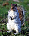 Flickr - law keven - Did Somebody say nuts^.jpg