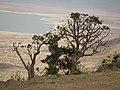 Flora of Tanzania 3819 Nevit.jpg