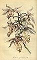 Flore des serres et des jardins de l'Europe - vol. 01 - page 139.jpg