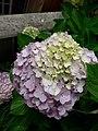 Flower20180523 101113.jpg