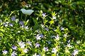 Flower (34819911042).jpg