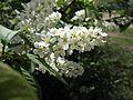 Flower 67 (6997231079).jpg