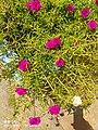 Flower in india.jpg