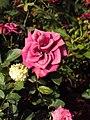 Flowers - Uncategorised Garden plants 135.JPG