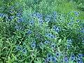 Flowers 27 June 2010 (2).JPG