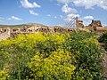 Flowers and Ruins - Takht-e Soleiman - Western Iran (7421821748).jpg