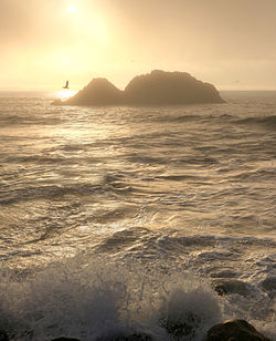 Foggy sunset with Brown Pelicans.jpg