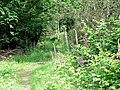 Footpath in Coneyburrow Wood - geograph.org.uk - 451176.jpg