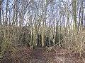 Footpath into Church Wood - geograph.org.uk - 1150316.jpg