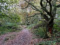 Footpath to Penn Common, Colton Hills, Wolverhampton - geograph.org.uk - 609797.jpg