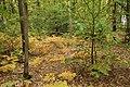 Forêt Départementale de Méridon à Chevreuse le 29 septembre 2017 - 20.jpg