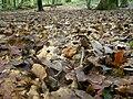 Forest-floor022.jpg