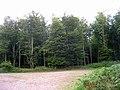 Forest Hanger - geograph.org.uk - 225624.jpg