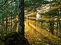 Forest Light (10523143414).jpg