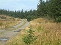 Forest Track - geograph.org.uk - 577555.jpg