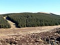 Forestry on Black Law - geograph.org.uk - 389210.jpg