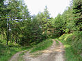 Forestry roads on Pernassie Hill - geograph.org.uk - 463649.jpg