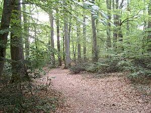 Forest of Tronçais - Image: Foretdetroncais 1