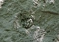 Fossils at Niagara Glen & Trails (21560685563).jpg